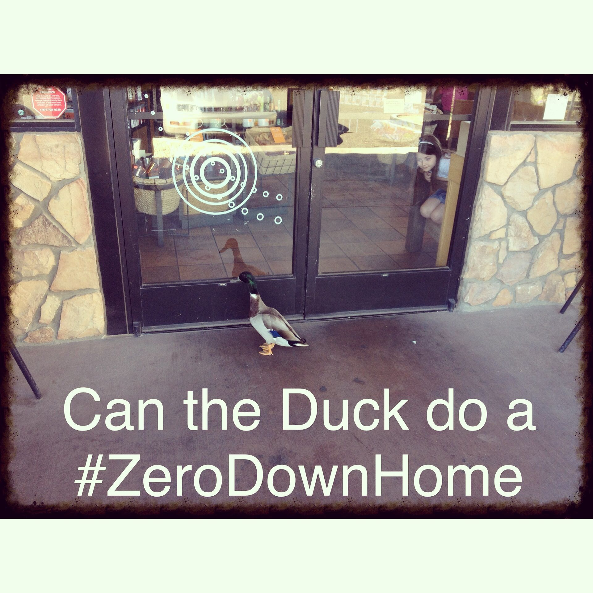 I Went To Starbucks The Other Day And The Duck Was Trying