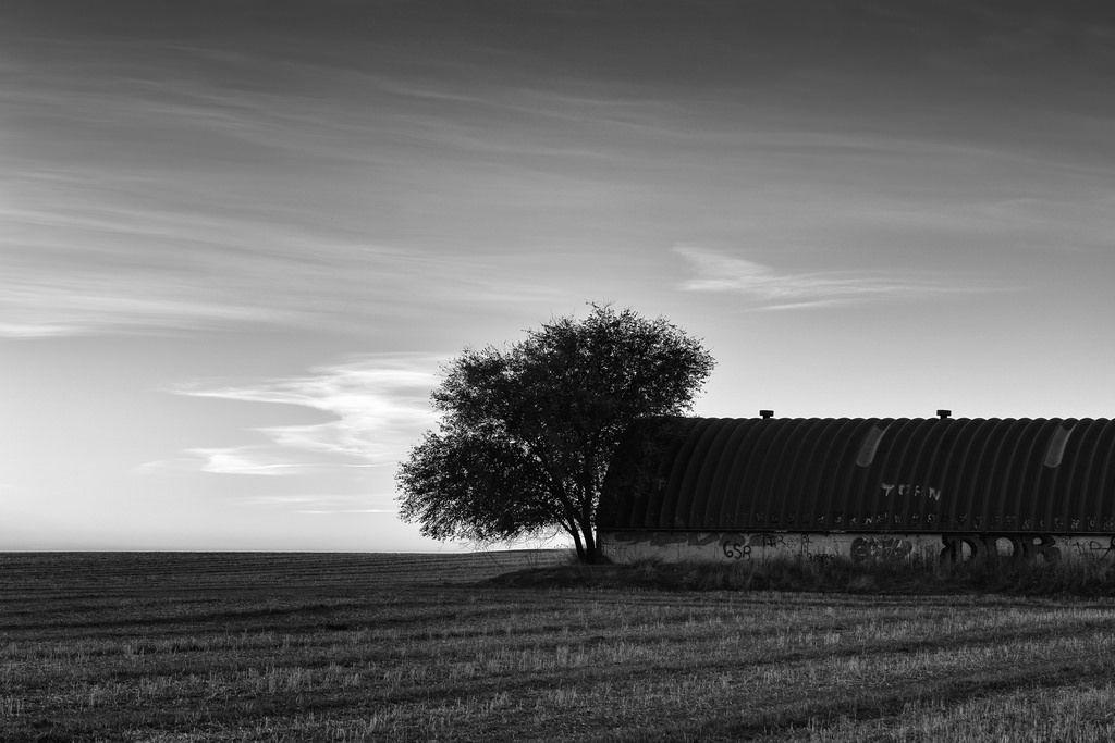 El cielo y el árbol 30102016-IMG_1649-Editar