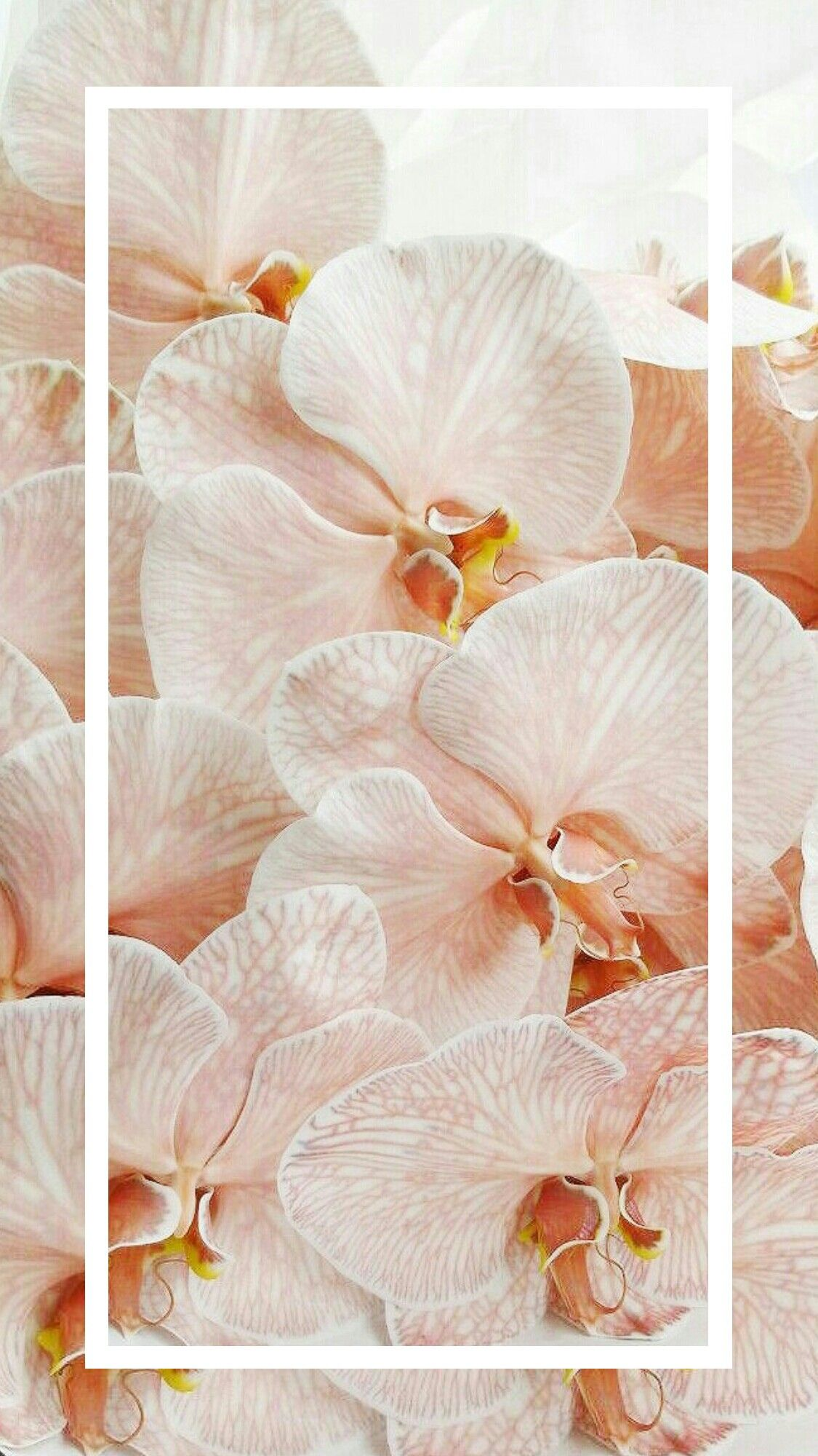 Orchids Orchid Wallpaper Orchids Flower Art