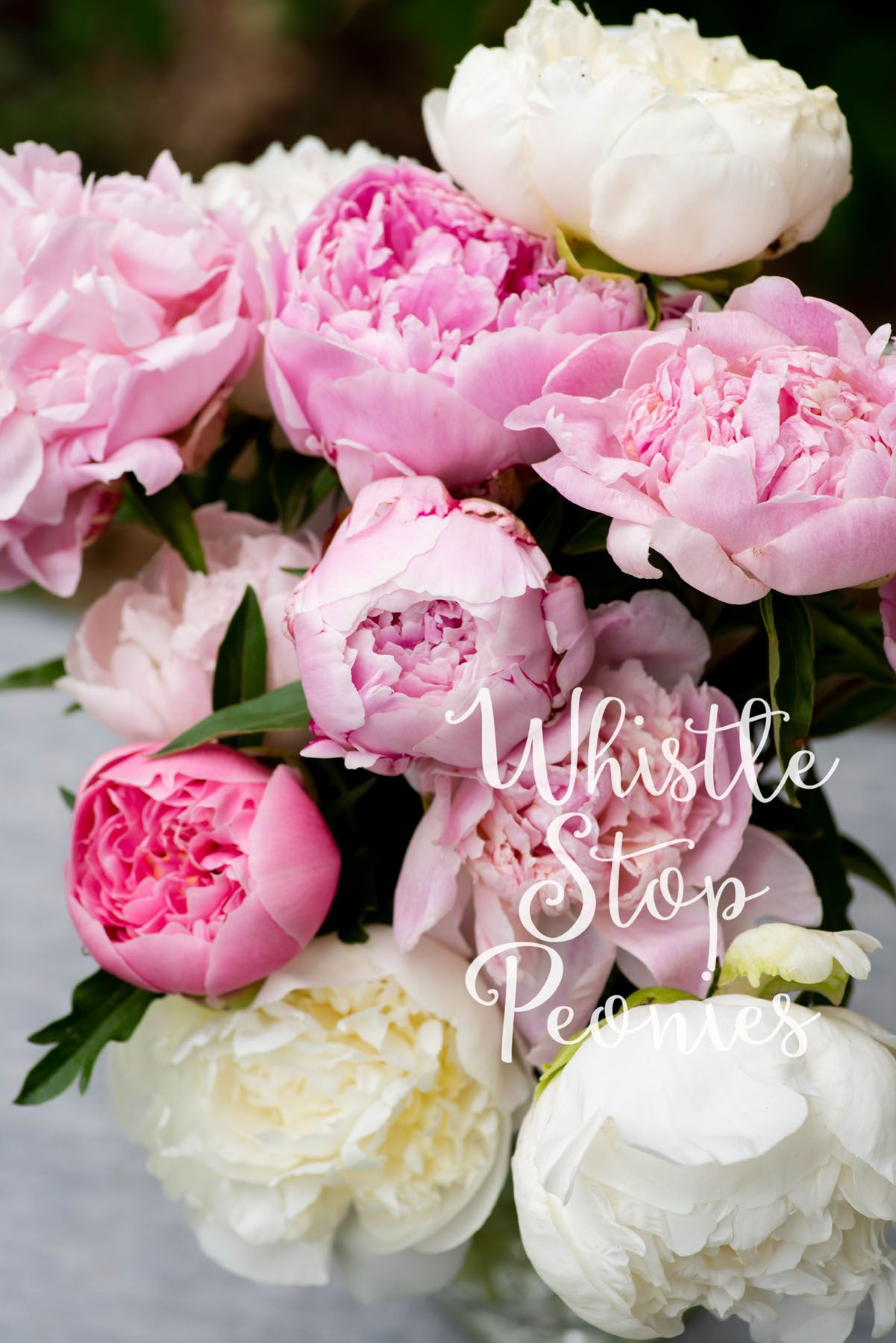 Mixed bouquet of peonies but the etch salmon truly stands out mixed bouquet of peonies but the etch salmon truly stands out mightylinksfo