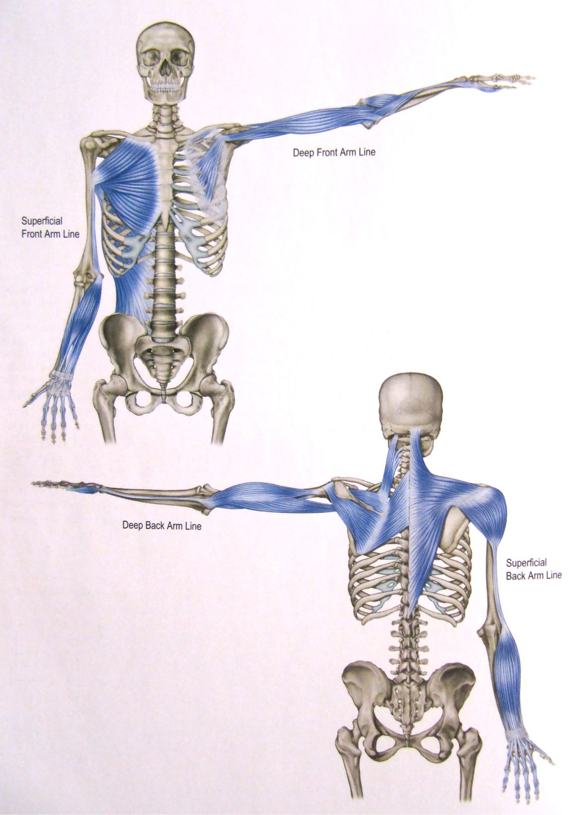 In the tor yu, the hands draw out the spine – as the body sends out ...