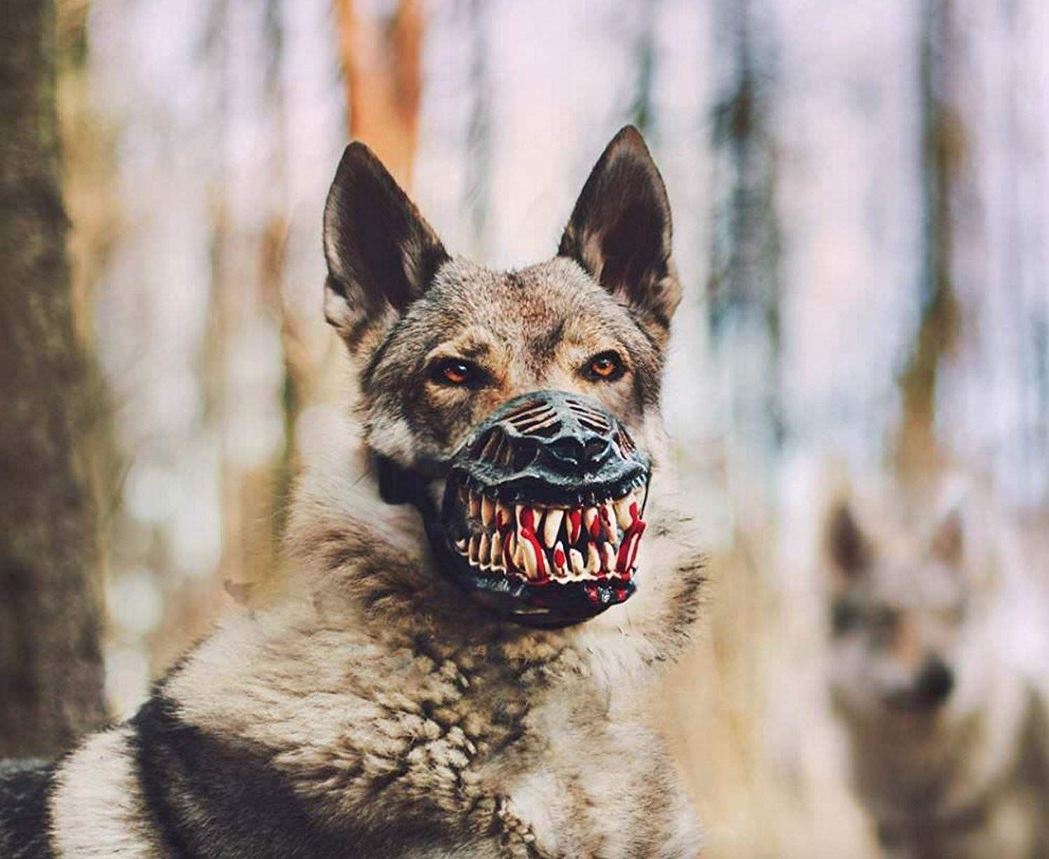 Werewolf Dog Muzzle Scary Dogs Dogs