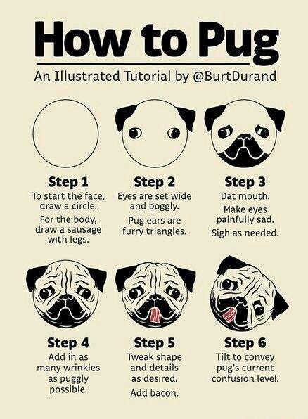 How To Draw A Pug Pugs Pug Art Cute Pugs