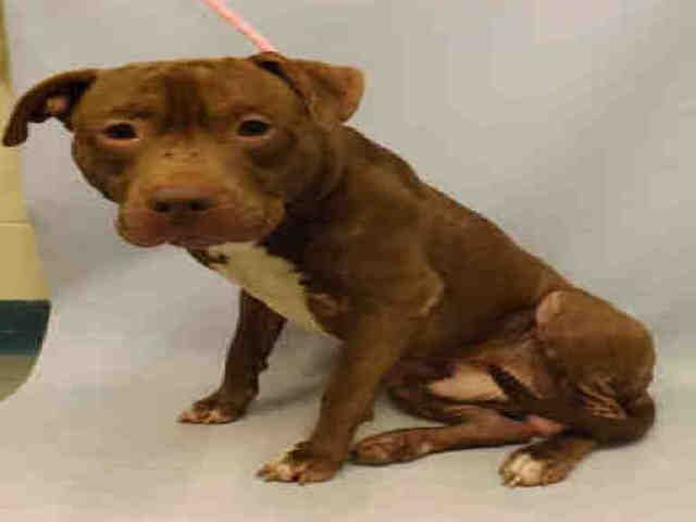 Wonderful Innocent Diamond Relisted To Die 4 27 19 At The High Kill Center Nyc Acc Ij2 Nyc Dogs Dog Adoption Dogs