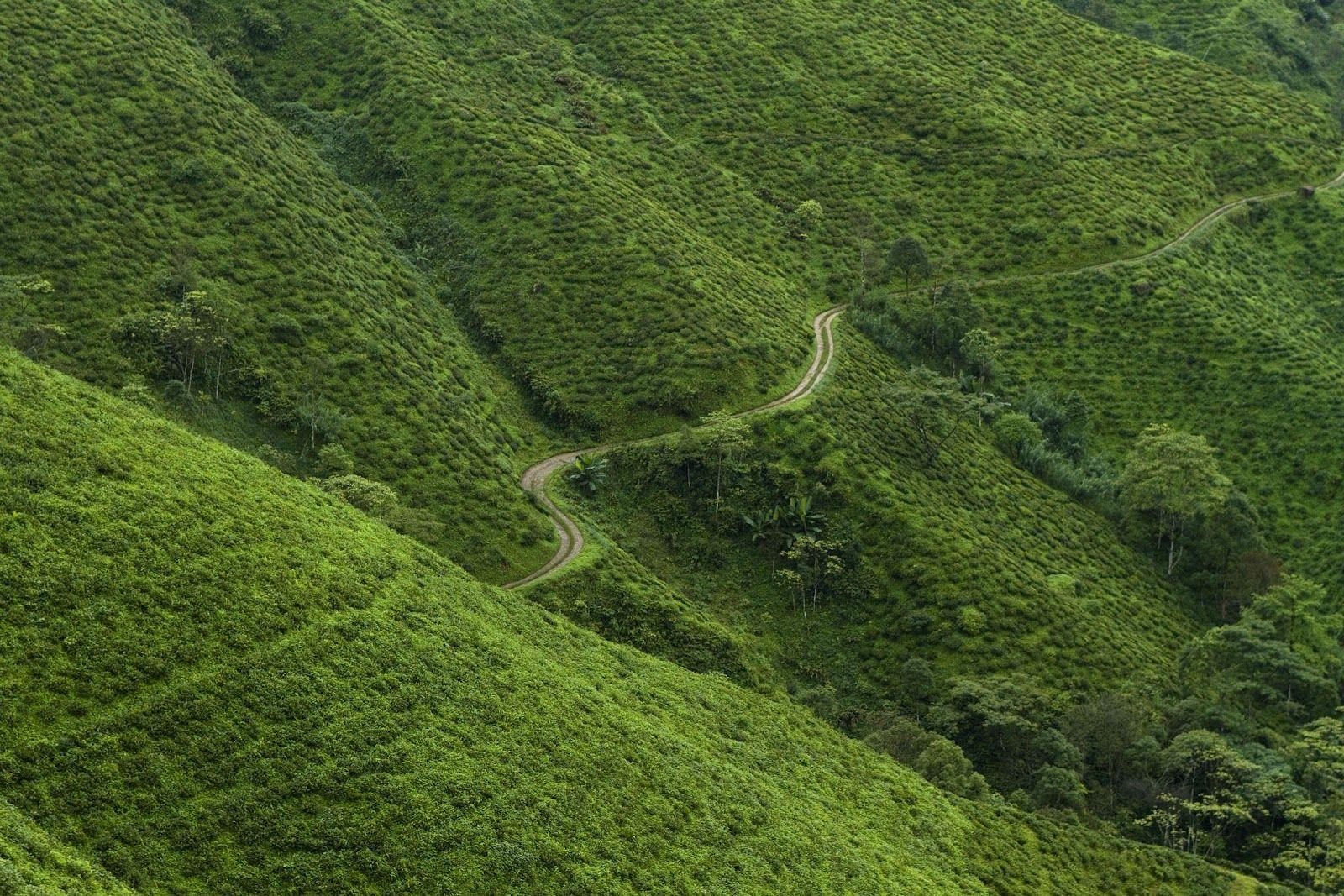 Darjeeling , India Outdoor, India