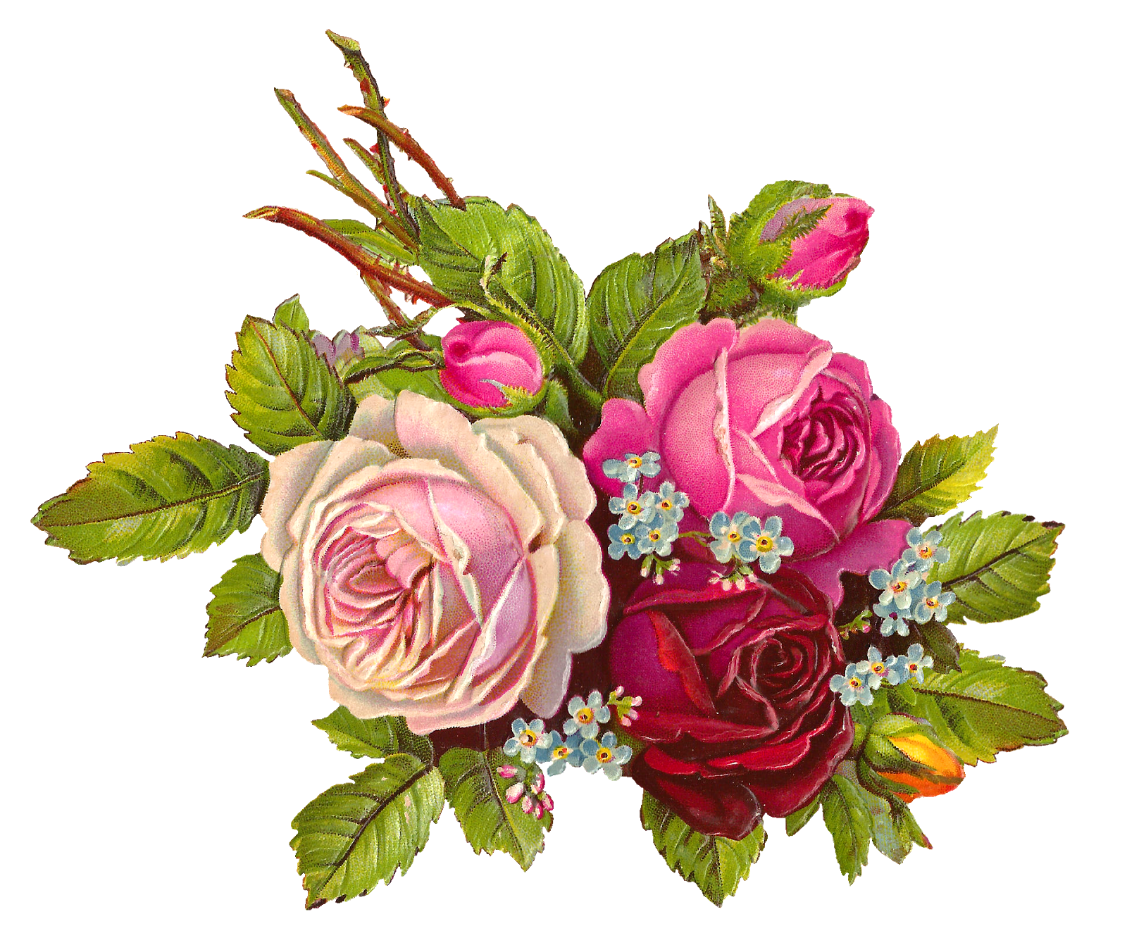 Gorgeous Free Digital Rose Download Of Three Big Roses Leaves And Stems