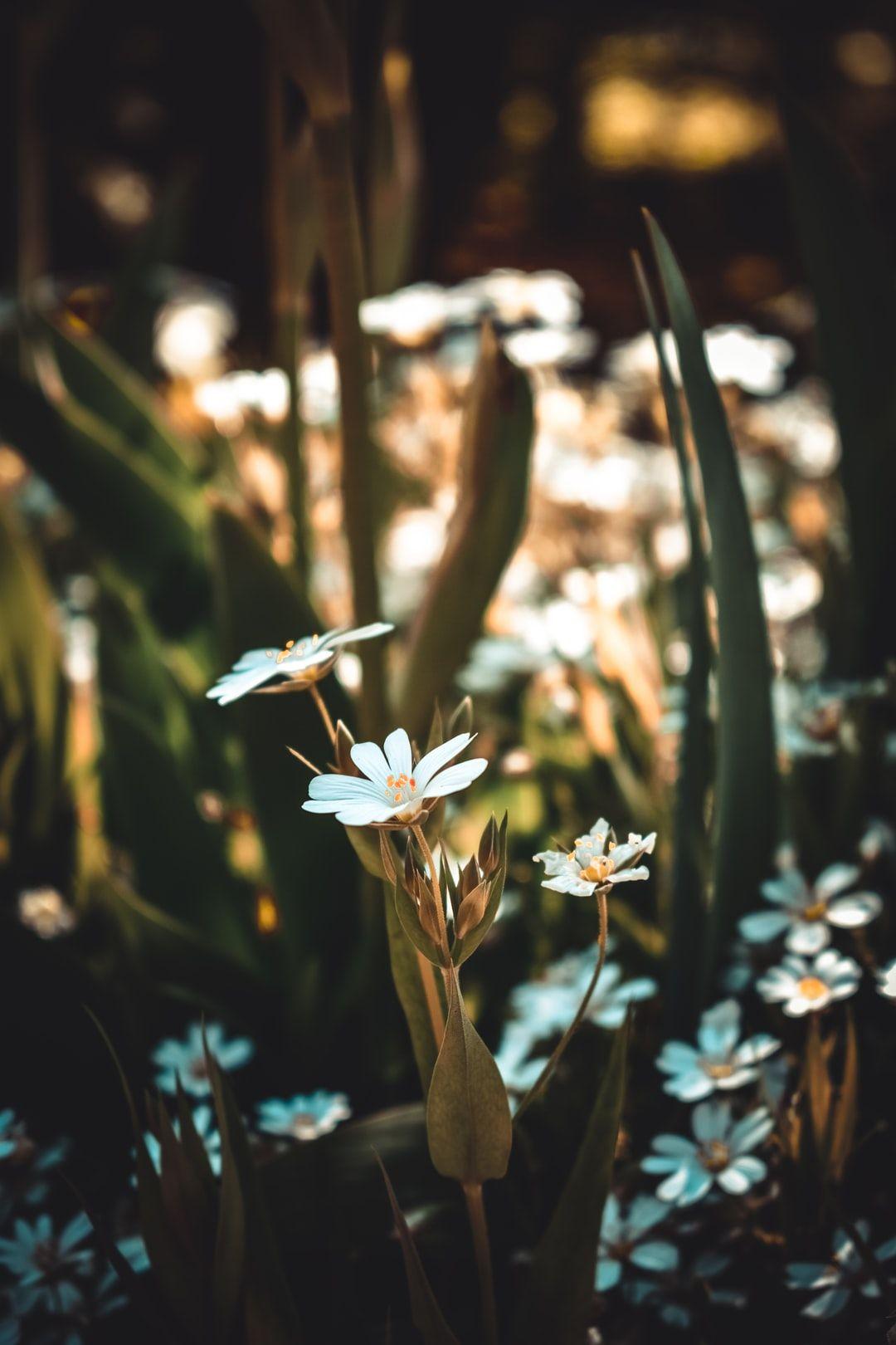 Flowers.. Download this photo by Serafima Lazarenko on