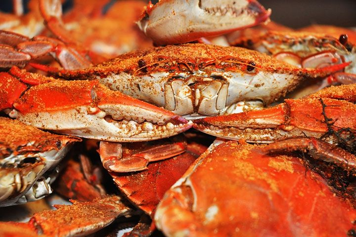 Crab House Restaurants Regional Directory Crab House Crab Crab Feast