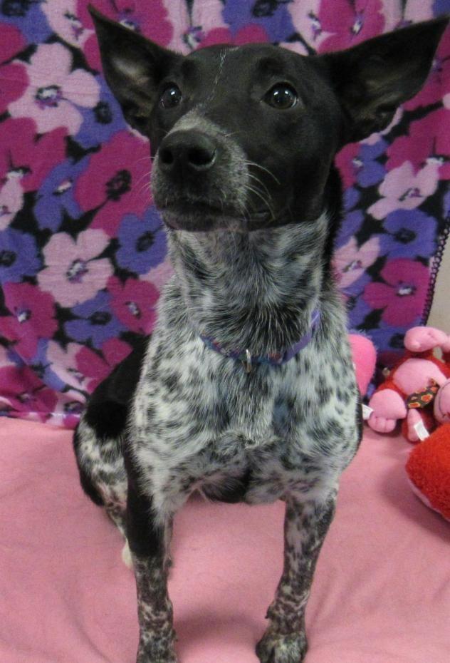 Adopt Piper On Petfinder Animal Rescue Animals Pet Adoption
