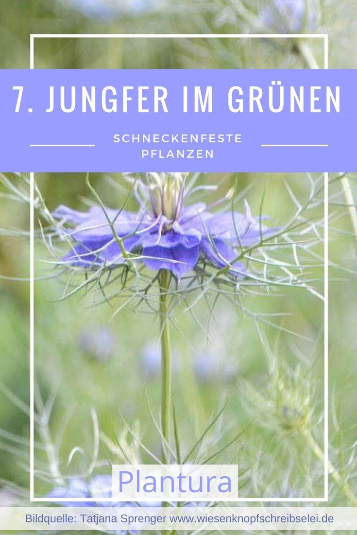 Die 10 Schneckenfestesten Pflanzen Fur Ihren Garten Plantura Pflanzen Schnecken Im Garten Schadlinge Im Garten