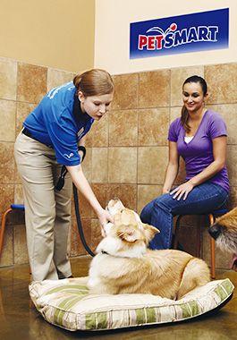 Dog Training Puppy And Adult Dog Training Classes
