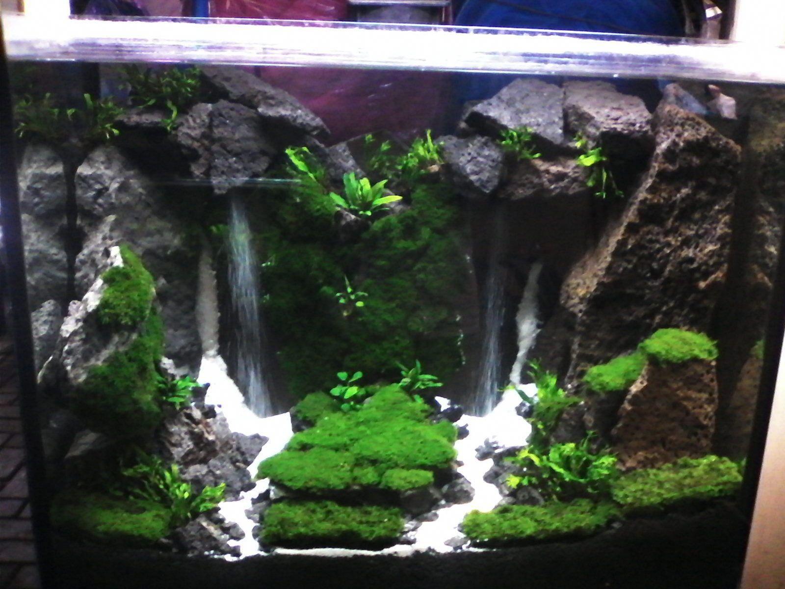 Tutorial Cara Membuat Tanaman Hias Di Dalam Aquarium Selamat Datang Di Dunia Satwa Kali Ini Admin Mau Berb Aquarium Backgrounds Aquarium Set Saltwater Tank