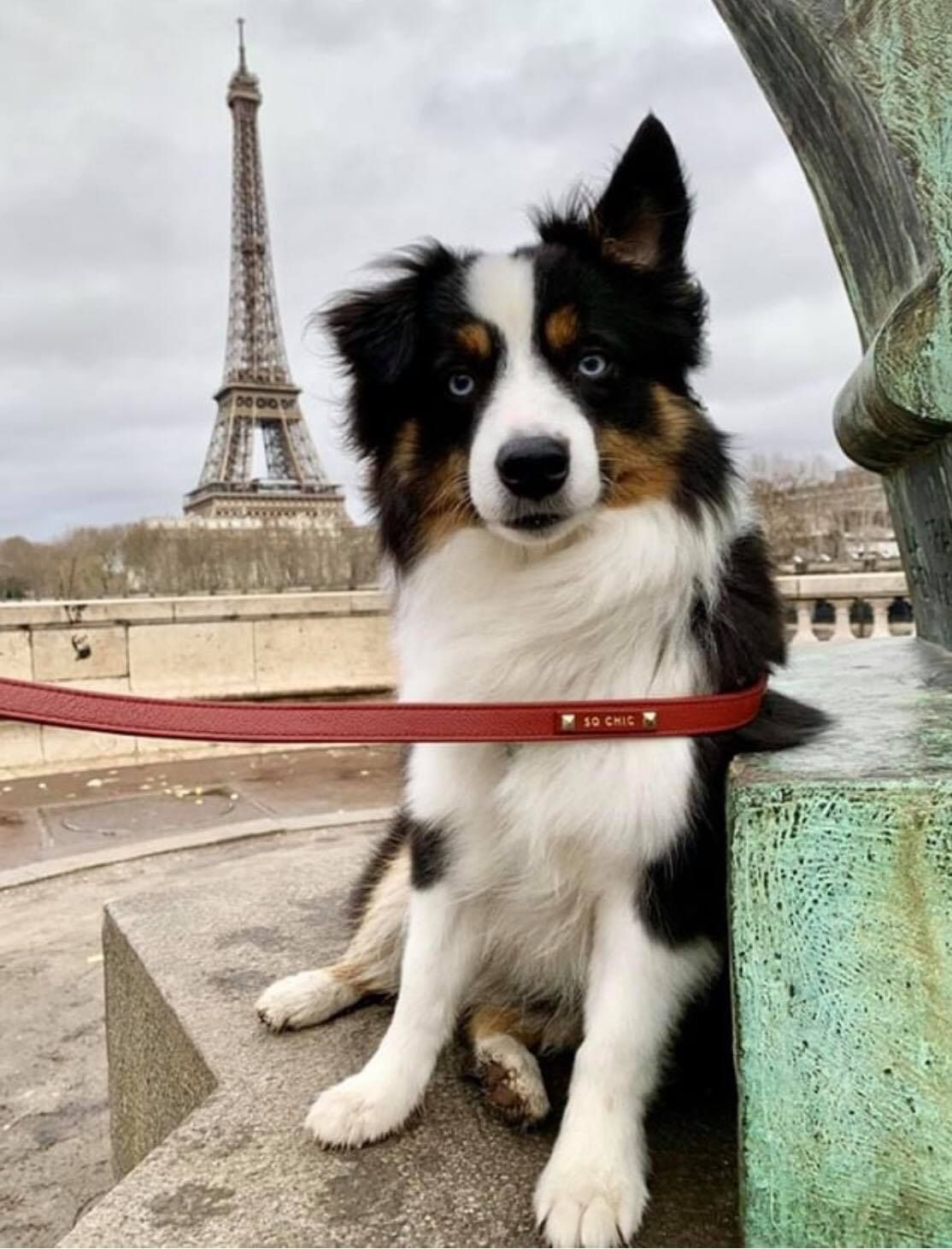 Make Your Dog The Most Stylish Pup In The World With Our Parisian