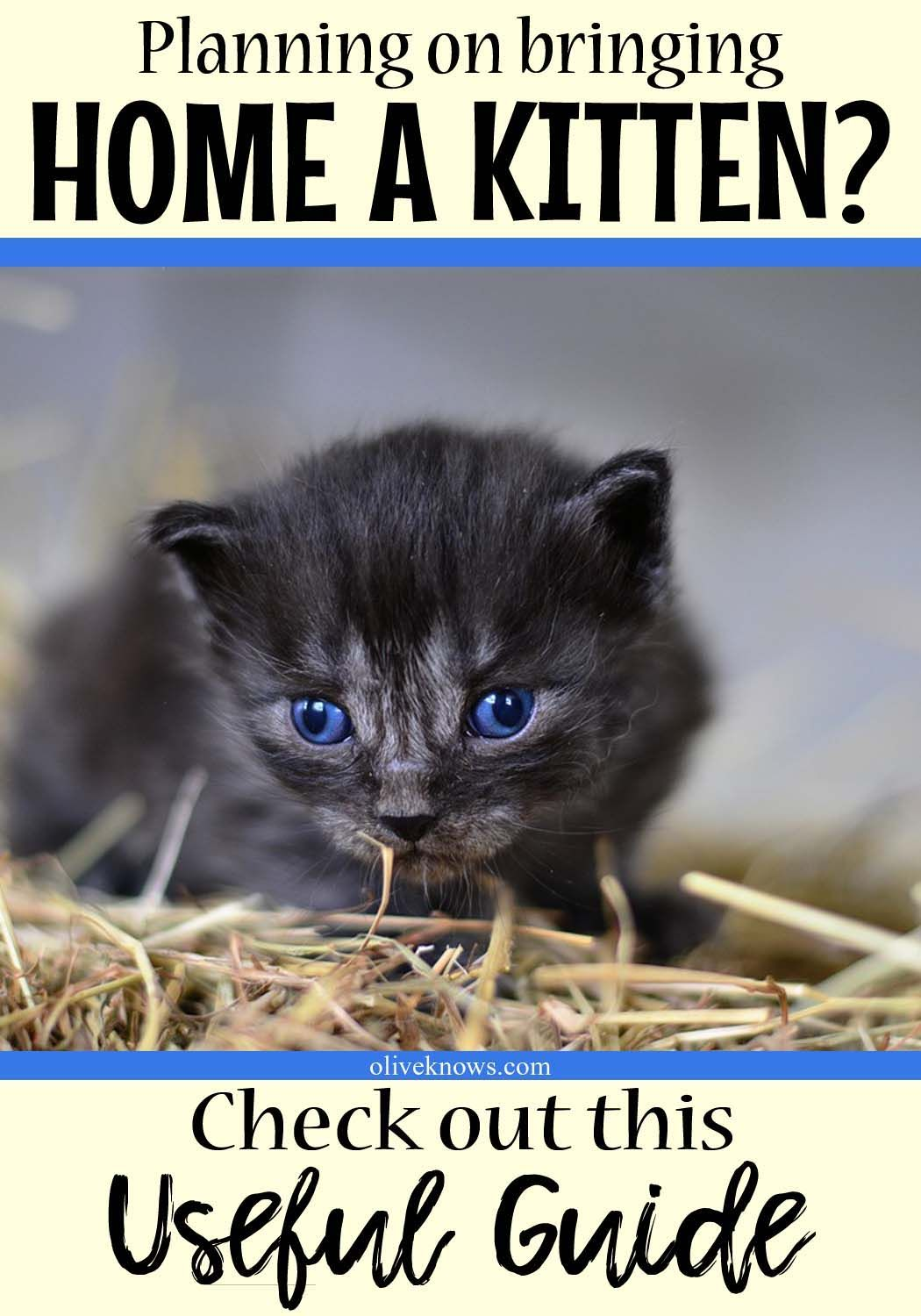 When Can You Bring Home A Kitten Oliveknows Cat Training Raising Kittens Kitten