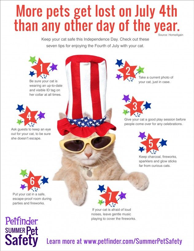 Pet safety, 4th of July, fireworks, cats. More pets get lost on the 4th of July than any other day of the year.