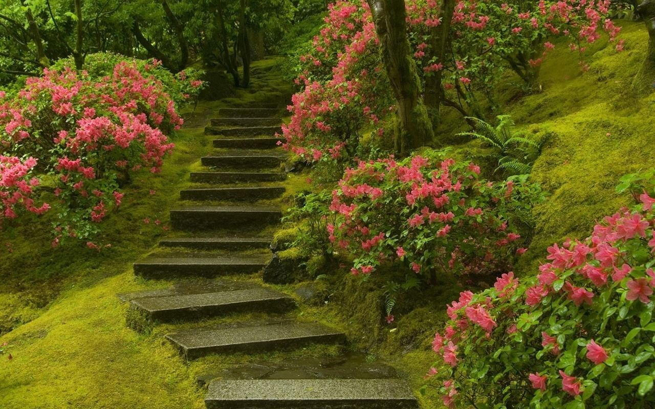 Japanese Garden Washington Park Landscape Desktop Wallpaper