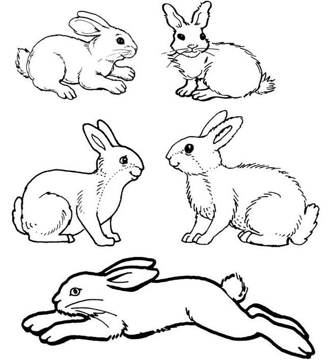 Pin By Marko Ra On Rabbits Hares Bunny Coloring Pages Bunny Drawing Rabbit Silhouette