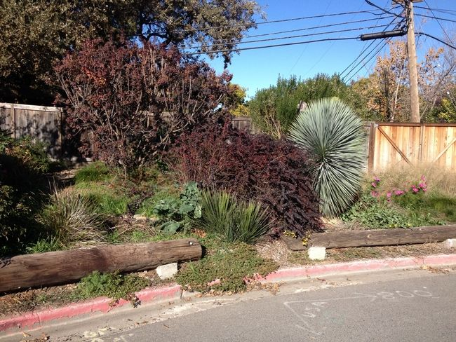 8bf54725a547dbf54013a44c62732efc - University Of California Master Gardener Program