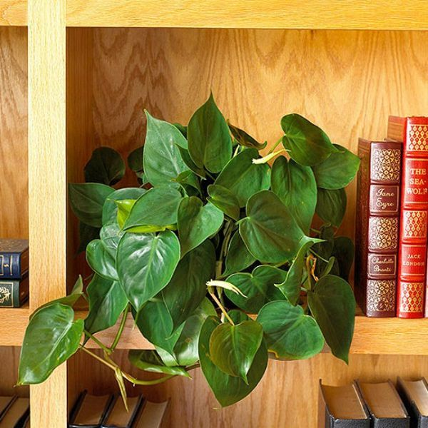 34 Poisonous Houseplants For Dogs And Cats Growing Plants
