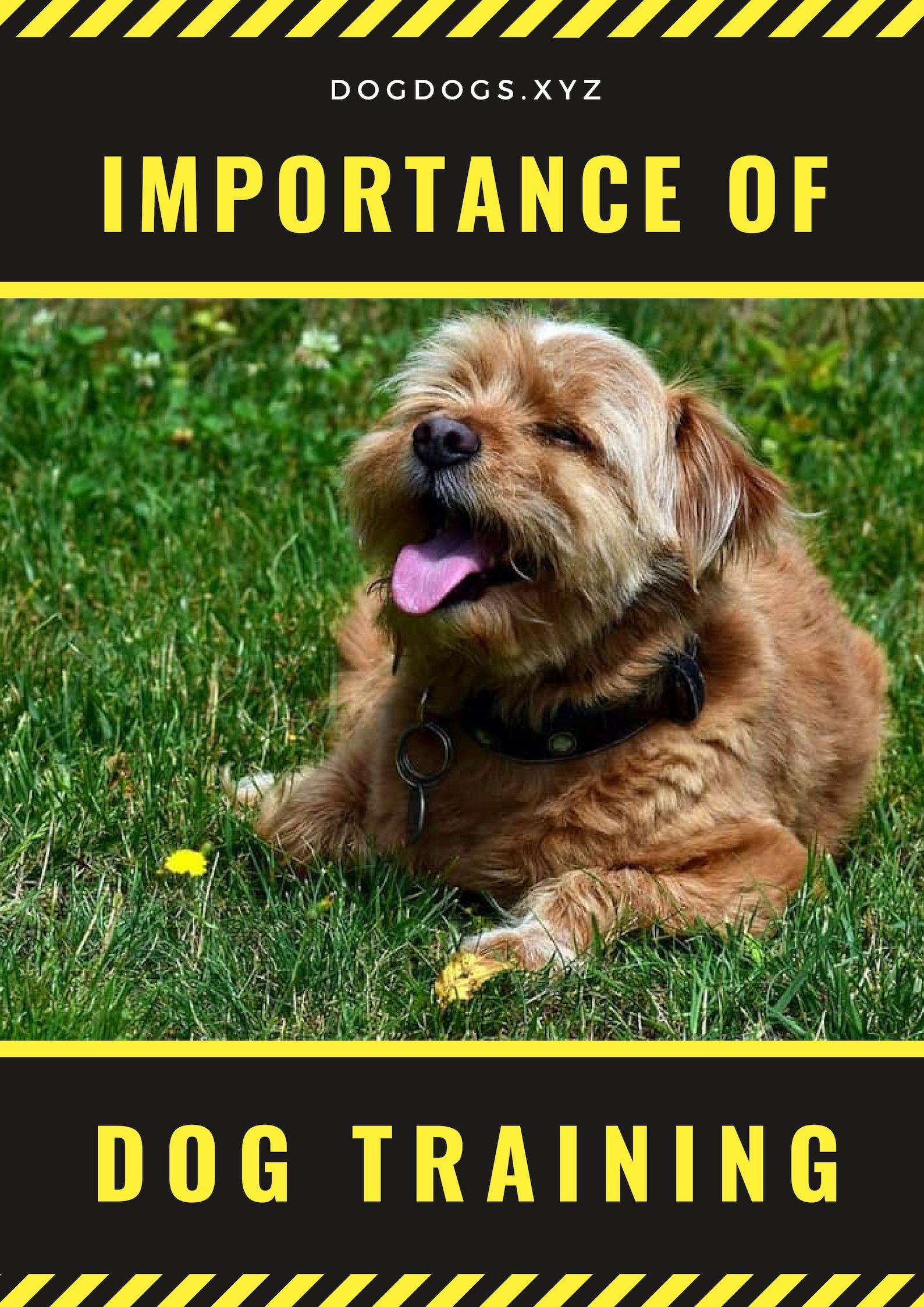 Fearful Small Dog Collar Dogfoodie Militarydogtraining Dog