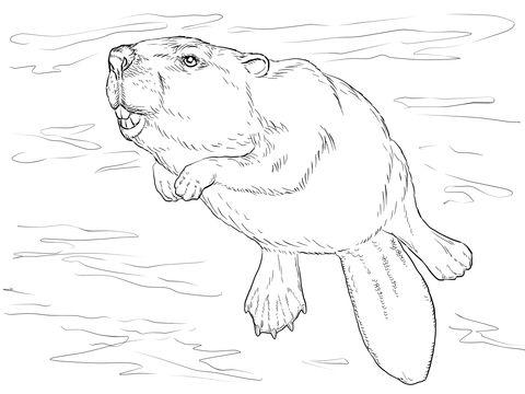 Castor Nadando Dibujo para colorear | animales | Pinterest ...
