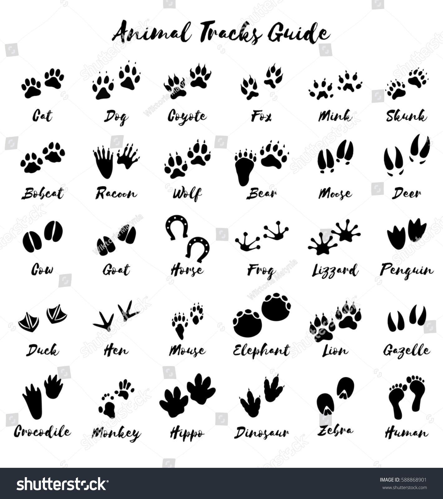 Animal Tracks Foot Print Guide Animal Footprints Animal Tracks Animal Print Tattoo
