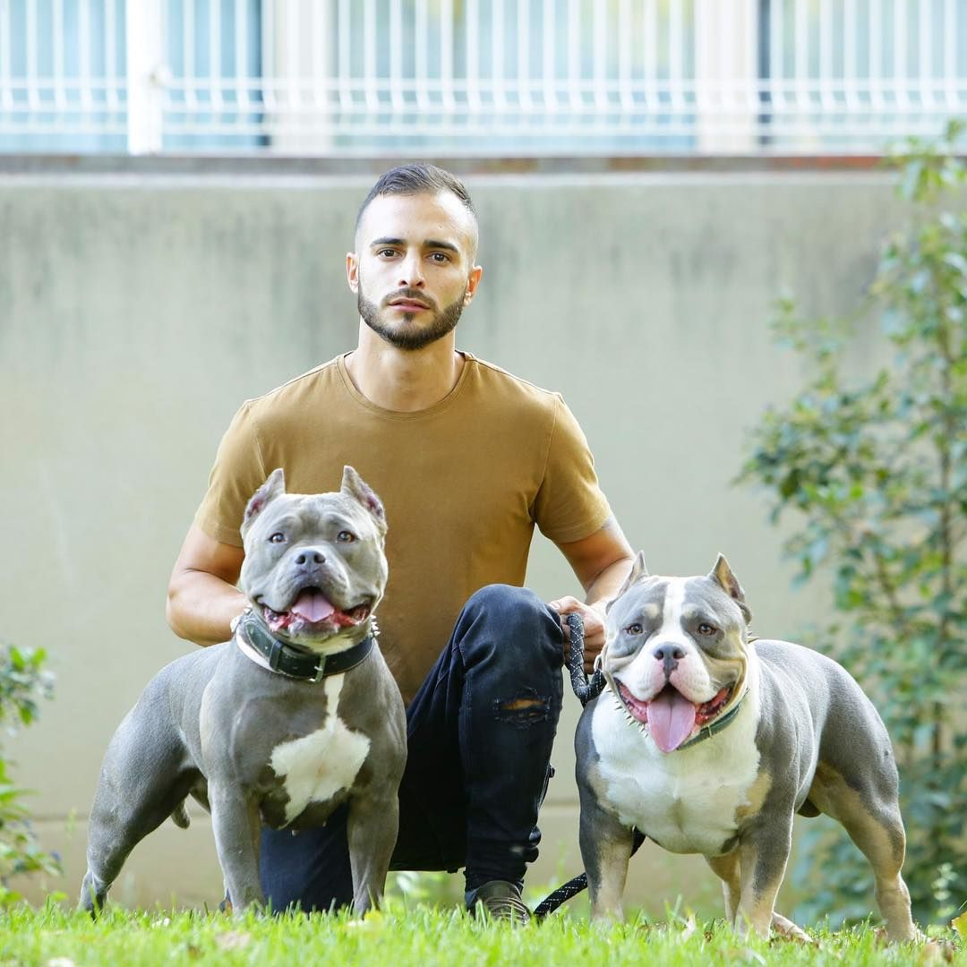 7 982 Likes 56 Comments American Bully Americanbully On