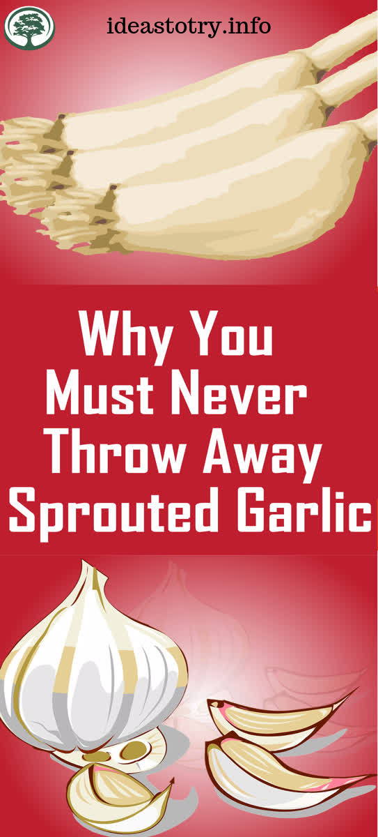 Why You Must Never Throw Away Sprouted Garlic ! #crochetformoney