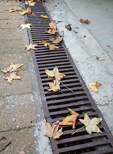 How to clean the drains these drains are designed to for Rainwater drain problems