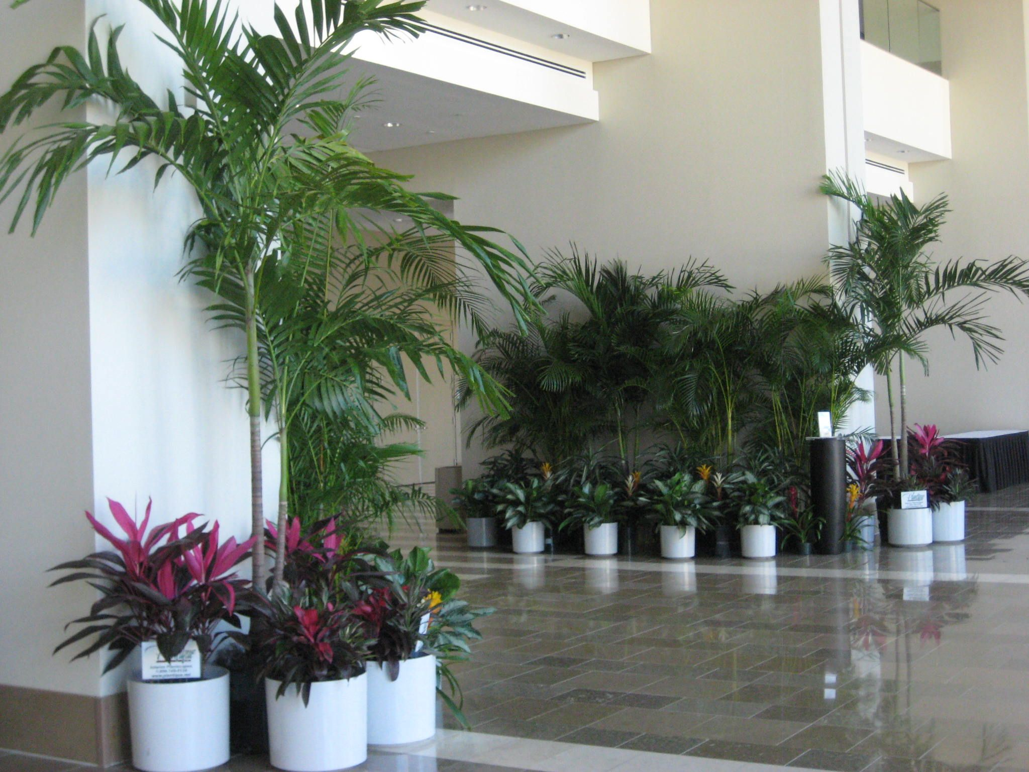 Plants & trees help guide patrons into an exhibition hall