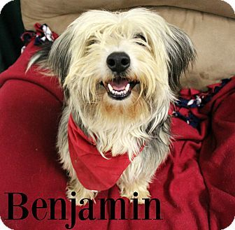 Melbourne Ky Bearded Collie Mix Meet Benjamin A Dog For Adoption Http Www Adoptapet Com Pet 17470921 Melbourne Kentu Bearded Collie Dog Adoption Collie