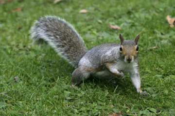 17 Household & Food Tips to make Life easier - like discouraging squirrels. Surely hope this works.