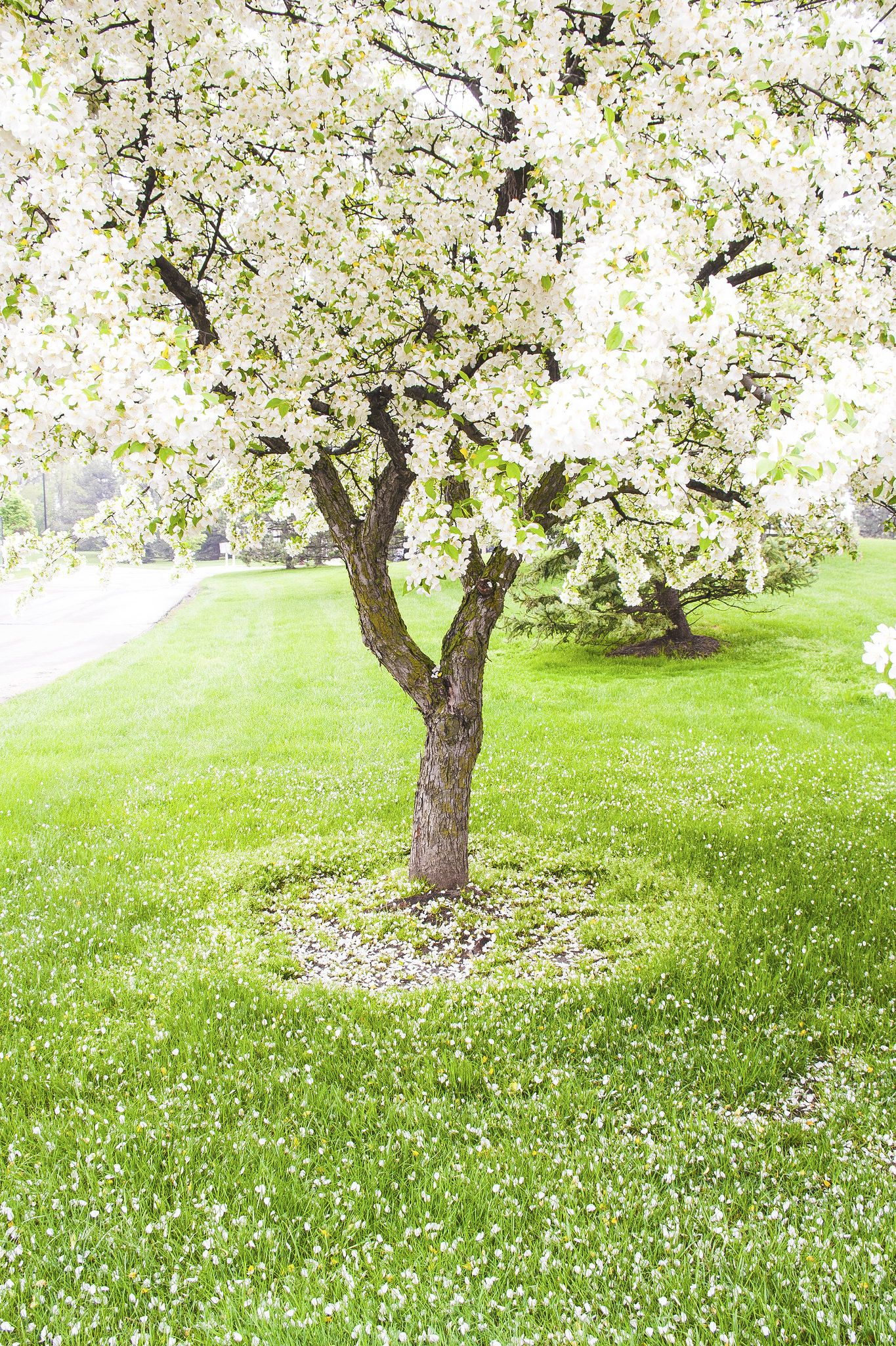 Spring flowering spring tree flower tree and spring flowers i dont know the name of these flowers dhlflorist Image collections
