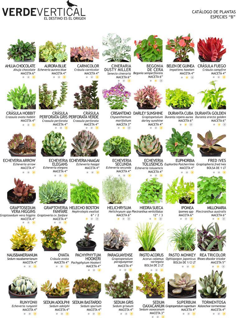 Jardines verticales ideas para el hogar pinterest - Plantas para jardines verticales ...