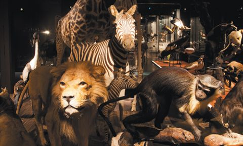 Naturhistorisches Museum Fribourg