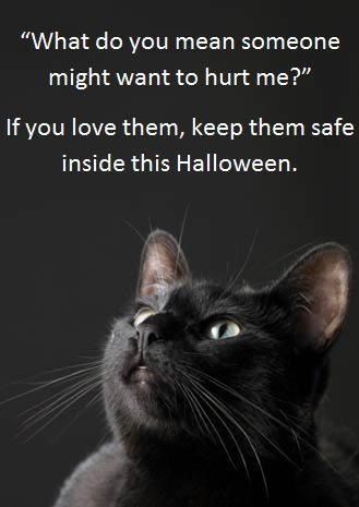 Black cats are particularly at risk around the night of Halloween. Unfortunately there are sadistic people around who think it clever or cool to harm, torture or even kill cats, particularly cats that are black. Keep your pet, black cat or not, safely indoors on the days leading up to Halloween #halloween