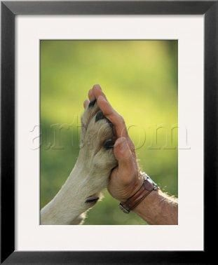 man and wolf paw