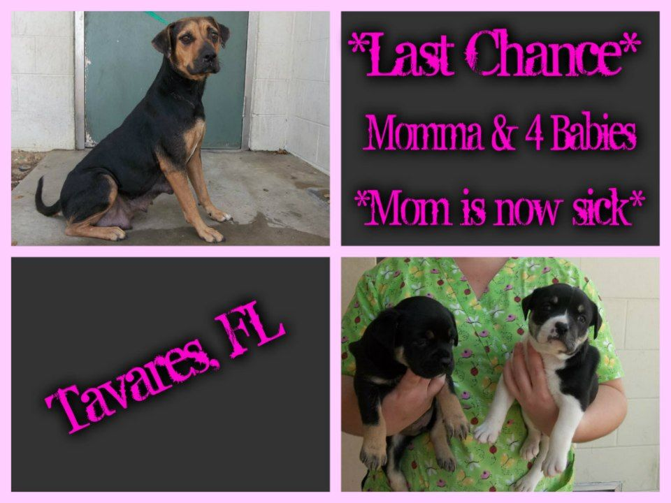 >>LAST CHANCE>SHE HAS 4 PUPS (3 WKS OLD) SHE WILL BE