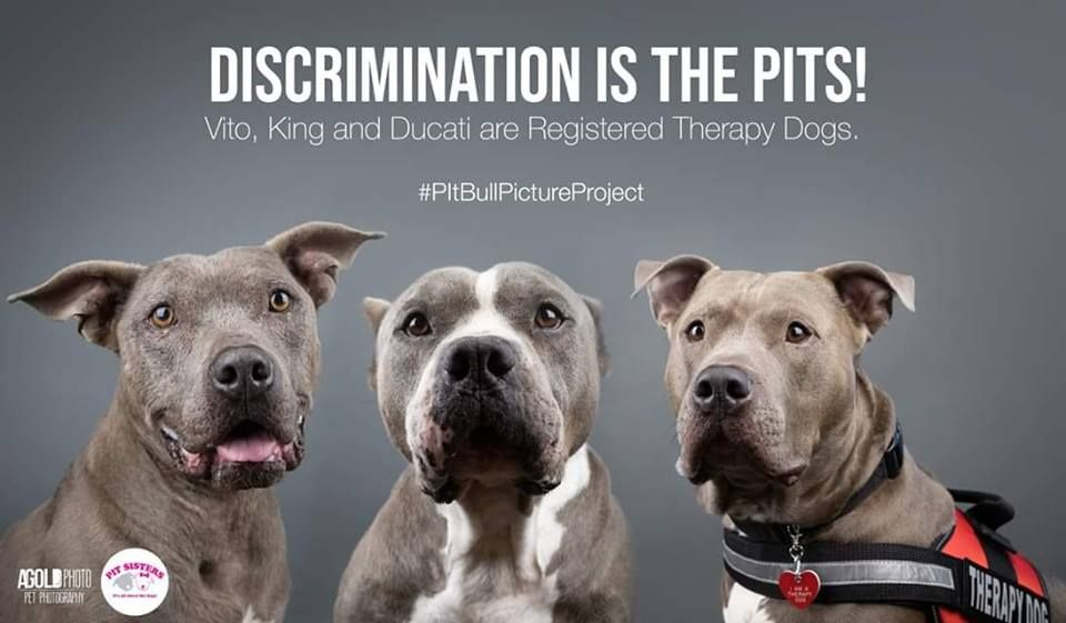 Did You Know Pit Bulls Make Some Of The Best Service Therapy And