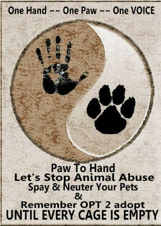 My idea- if you are against animal abuse put on your Pinterest bio #stopanimalabuse !!! Then on this picture comment #stopanimalabuse for a shoutout if you put it on your bio!!! THANK YOU - Brooke Keefe