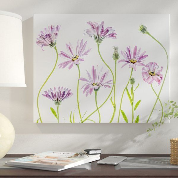 'Cape Daisies I' Graphic Art Print on Canvas  #Art #Canvas #Cape #daisies #Graphic #Print