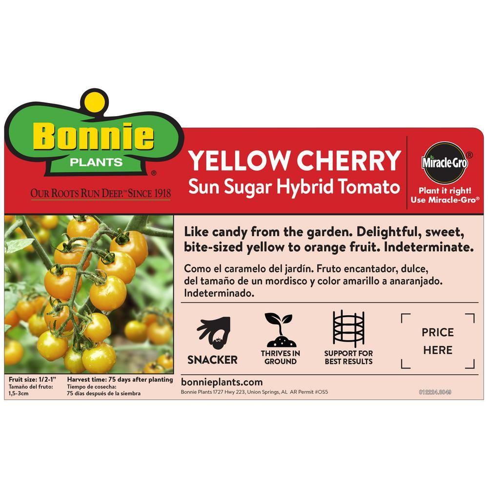 Bonnie Plants 4 5 In Yellow Cherry Tomato 0214 Cherry 640 x 480