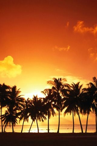 Palm Tree Sunset 320x480 wallpaper Palm tree sunset