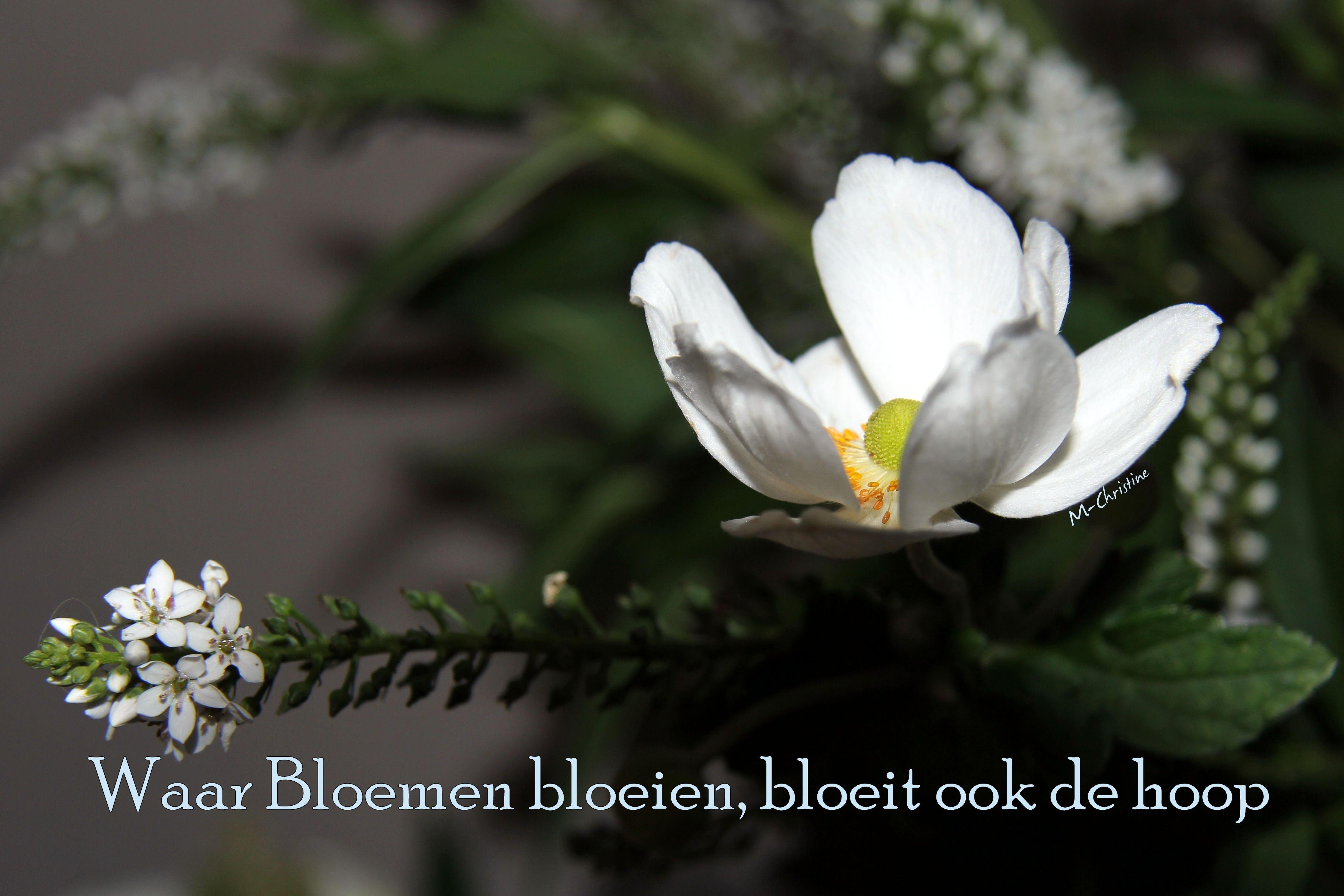 Citaten Over Bloemen : Waar bloemen bloeien bloeit ook de hoop geurende