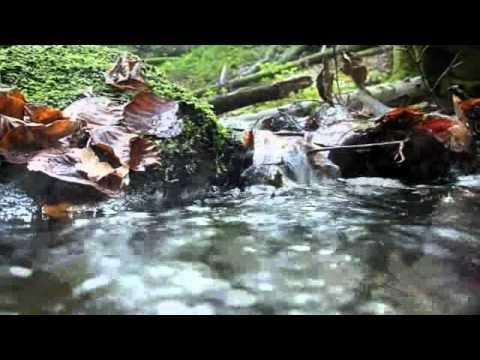 K-A  fellerband - Little Wild Creek  C):>{I-