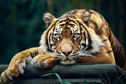 animal, lindo, eays, encantadora, dulce - en la imagen inspiradora Favim.com