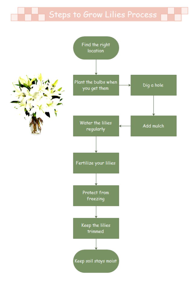 A Free Customizable Growing Lilies Process Steps Template Is Provided To Download And Print Quickly Get A Head Star Growing Lilies Flow Chart Design Templates