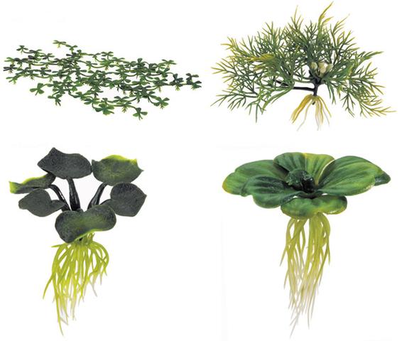 File Water Plants Png Plantas En Agua Jardin Acuatico Cubierto Plantas Acuaticas Flotantes