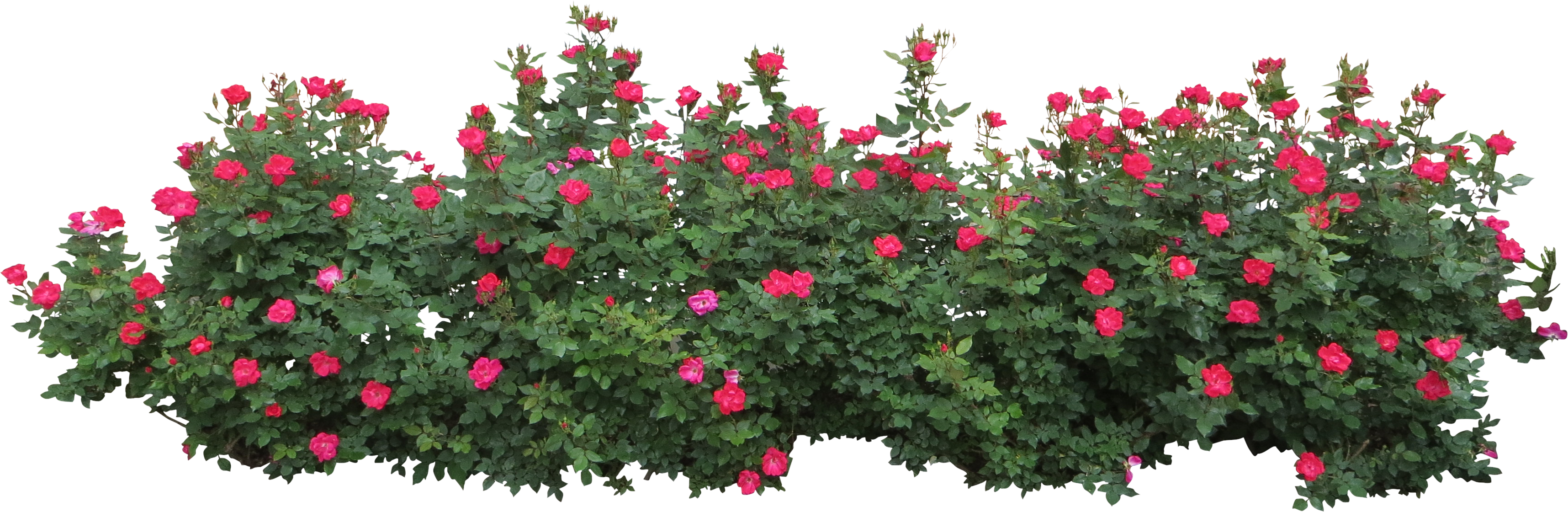 Bushes PNG image image with transparent background