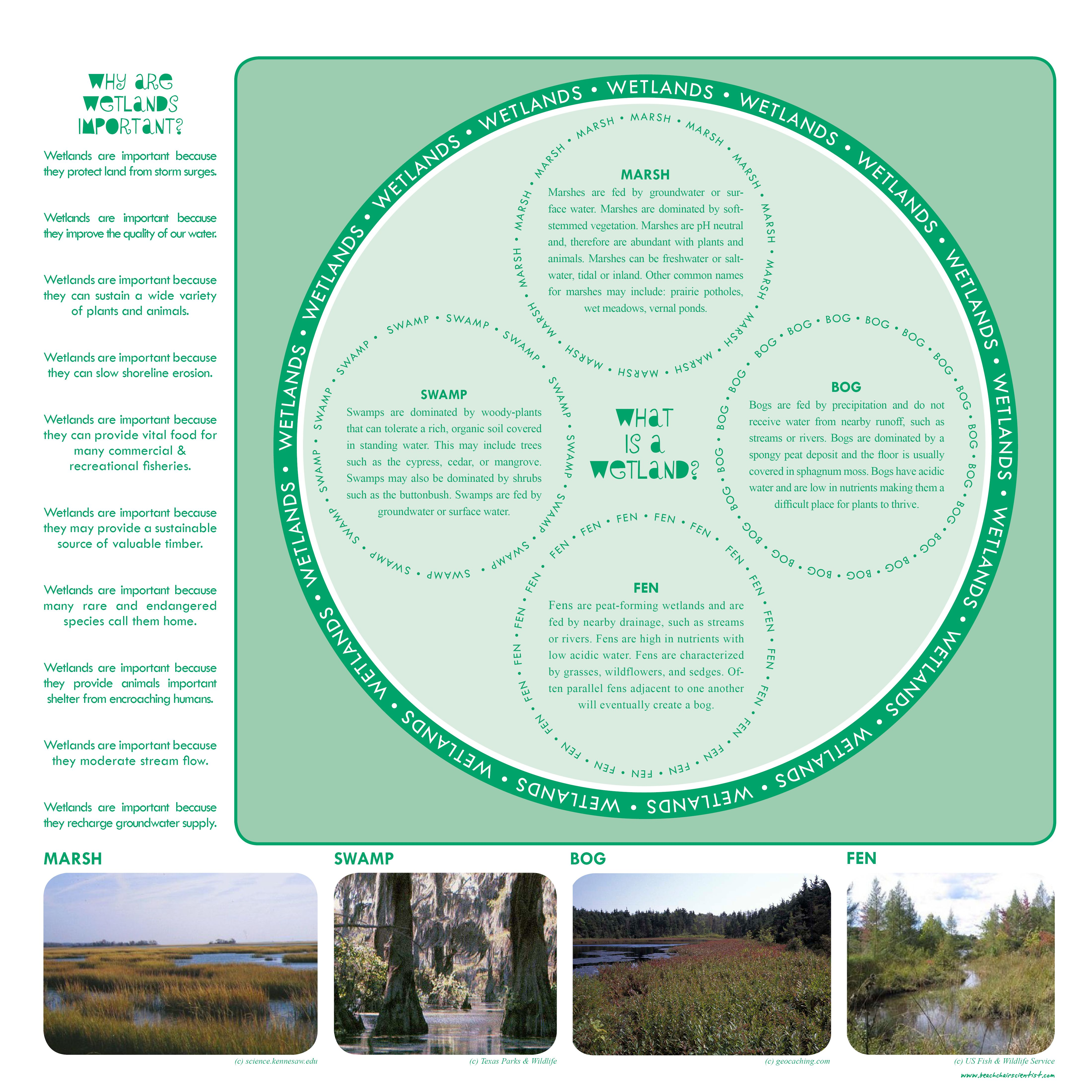 Wetlands Nice List Of Why Wetlands Are Important And The 4 Types Of Wetlands Naturalist